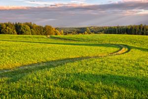Winding Dirt Road in Meadows