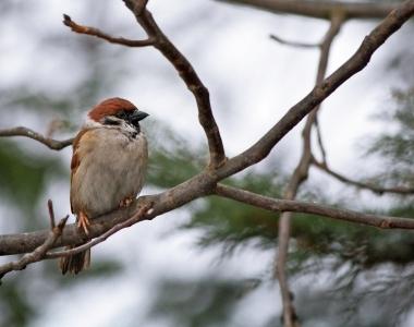 When a Sparrow Falls