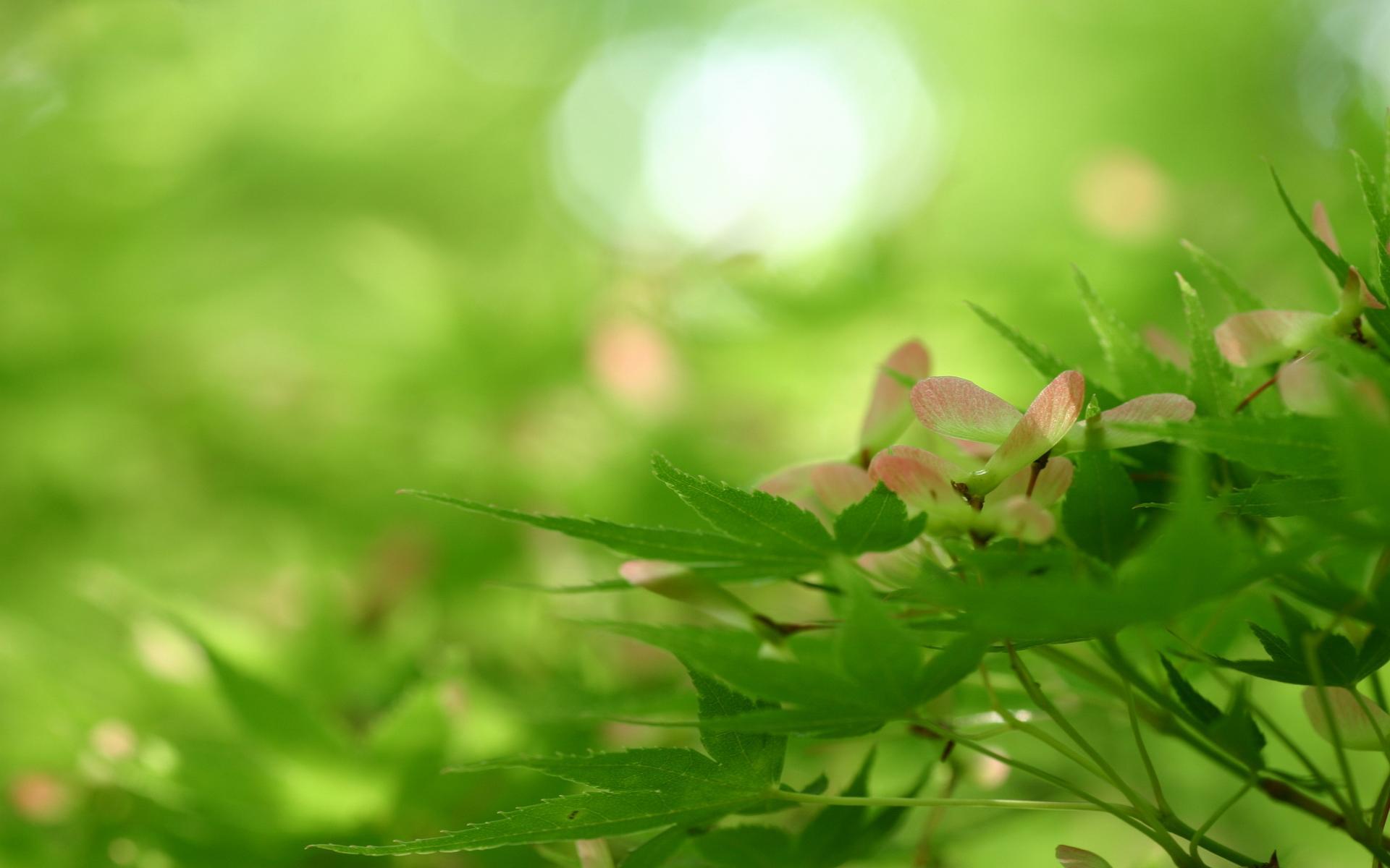 rising-nature-spring-8401